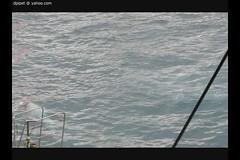 les orques de Marineland (Dominique Lenoir) Tags: video orca killerwhale antibes marineland orcinusorca orka orque 06600 paulard spkhugger spckhuggare kosatkadrav zwaardwalvis groserschwertwal miekkavalas katilbalina baleinetueuse dominiquelenoir