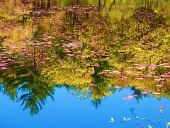 Reflections on a Pond (brooksbos) Tags: morning blue trees sky sun color colour reflection green nature water reflections geotagged ma outdoors photography photo spring pond colorful mr outdoor massachusetts brian scenic newengland vivid olympus lillies colourful bostonma brooks middlesexfells bostonist longpond lurvely everyblock thatsboston xz1 brooksbos olympusxz1