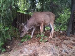 Yosemite Park - increíble!!! - vimos venados, ardillas y un oso en estado salvaje :)