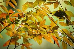 Autumn colors (johannekekroesbergen) Tags: autumncolors