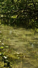 _1050591 (HennerzB) Tags: uk flowers trees england lake reflection green nature forest river landscape scenery stream branches peaceful mysterious colourful tranquil henryphotography hennerz