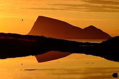 Håja in midnight gold (John A.Hemmingsen) Tags: light sunset sun reflection bird water night golden nordnorge midnightsun troms håja hillesøy nikkor1685dx nikond7000