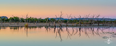 Morning calm (CreateEvoke) Tags: longexposure morning blue trees panorama orange lake water sunrise landscape photography community nikon bare australia westernaustralia oink wetland manfrotto d800 topend kununurra eastkimberley