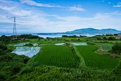 PhoTones Works #3150 (TAKUMA KIMURA) Tags: nature landscapes rice terraces scenic grassland   kimura   takuma    ep5  photones