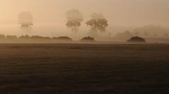 Landschaft unter Nebelschwaden; Meggerdorf, Stapelholm (6) (Chironius) Tags: morning fog sunrise germany deutschland dawn nebel alba amanecer alemania dmmerung landschaft sonnenaufgang allemagne morgen niebla brouillard germania ochtend schleswigholstein matin gegenlicht  morgens zonsopgang mattina aube ogie pomie morgendmmerung morgengrauen niemcy dageraad     pomienie szlezwigholsztyn