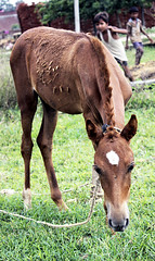 Horse_Baby (art.salilsharma) Tags: life road birthday old family food india flower face leaf friend faith daily celebration photograhy
