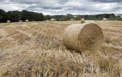 Hay rolls crop (saleem shahid) Tags: