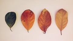 (johnpaulrebano) Tags: light vintage leaf experiment practice leak