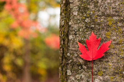 fall colors- 8