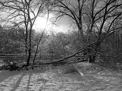 Ice storm in Toronto (IgorKole) Tags: above park city light sun toronto canada color colour art nature beautiful wow outside 1 photo amazing nice bravo artist photos awesome great scenic landmarks landmark best after fabulous senic e500 outdors anawesomeshot
