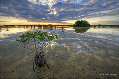 Red Mangroves at sunrise (Kevin B Photo) Tags: park morning trees sky plants usa cloud sunlight plant color reflection tree green nature wet water beautiful beauty grass horizontal closeup clouds america sunrise landscape outdoors photography dawn nikon warm day exterior unitedstates graphic natural artistic florida cloudy native south scenic dramatic calm southern wetlands vegetation daytime grasses fl marsh wade southeast mangroves wading wetland serenitynow kevinbarry riverofgrass wowiekazowie