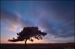 The Tree (Rob Millenaar) Tags: longexposure sky holland tree clouds landscape scenery hdr nationalparkdwingelderveld vision:sunset=0764 vision:mountain=0537 vision:sky=0978 vision:clouds=0978 vision:outdoor=0978 trigger