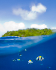 20081106_Solomons_0133print.jpg (michaeljohnalbert) Tags: fiji islands fineart southpacific processed tropics solomonislands