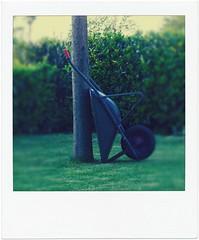 giardinaggio (ghiro1234 []) Tags: polaroid interestingness erba prato giardino inmygarden onexplore albizia carriola flickrscout tagliaerba poladroid formatomini