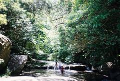 -NATURA CLASSICA- (atacamaki) Tags: travel nature japan river natura okinawa  iriomote  classica