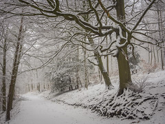 Winter in the Woods (Damian_Ward) Tags: wood trees winter snow forest lumix chilterns buckinghamshire panasonic bucks dmc wendover astonhill m43 thechilterns chilternhills mft wendoverwoods 20mmlens gh3 damianward micro43 microfourthirds hh020 ©damianward
