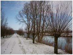 winter scene (stevefge) Tags: trees winter snow water netherlands nederland footprints beuningen nederlandvandaag