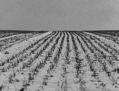 Winter dniss2 (christian_2372) Tags: winter white black germany deutschland nikon ugly depression schwarz trier weis d7100