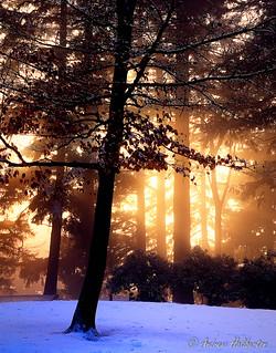 Last Rays, diffused, Mount Tabor Park, Portland, Oregon