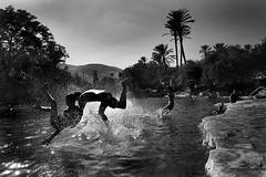 Diving Palestinians. (Stefano-Bosso) Tags: people lake love monochrome sport swim river palms mono israel blackwhite noiretblanc ngc dive middleeast diving arabic blackwhitephotos stefanobosso