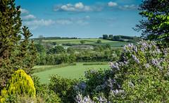 SpringTime Lushness (kitwilliams91) Tags: uk colour landscape spring somerset farmland environment