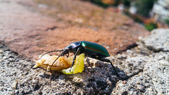 20160524_172504 (Georgy Dyankov) Tags: bug g4 lg bulgaria haskovo