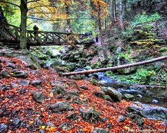 Hiking the Black Forest (PhotosToArtByMike) Tags: forest germany footbridge hiking hike schwarzwald blackforest mountainrange badenwrttemberg southerngermany denseforest