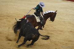 _DSC0307-2 (chris30300) Tags: france les cartagena corrida toro palavas rejon palavaslesflots flots languedocroussillonmidipyrnes languedocroussillonmidipyrn