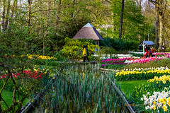 216A3166 (Rambonp: Right Eye Operated,Left takes few more da) Tags: pink flowers blue trees red wallpaper holland green water yellow clouds canon landscape europe paradise tulips country keukenhof keukenhofgarden