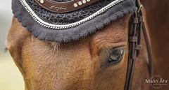 Nr. 1 (malinahr) Tags: horse color nature animal sport skne outdoor natur sterlen djur hst tvling skillinge