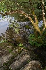 Padarn Lake Patterns and Reflections (PSHiggins) Tags: lake wales nikon cymru snowdon welsh dwr fullframe llanberis snowdonia llyn d600 padarn d610