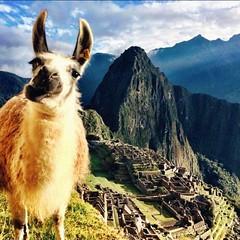 Machu Picchu photobomb (MysteryPlanet.com.ar) Tags: machu picchu machupicchu photobombing