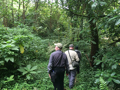 Birding the slopes of Mount Cameroon 4174