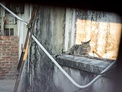 P4085754 (daisuke1230) Tags: cat olympus neko em  m43