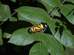 DSC04659 (familiapratta) Tags: nature insect iso100 sony natureza insects inseto insetos hx100v dschx100v