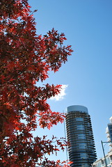 fall_231 (Sascha G Photography) Tags: autumn trees toronto color tree fall leaves leaf nikon seasons waterfront lakeshore indiansummer d60