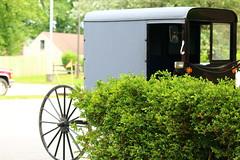 IMG_3769 (joyannmadd) Tags: amish horses intercourse pennsylvania kitchenkettlevillage farm animals lancaster coumty pa farms nature outdoors