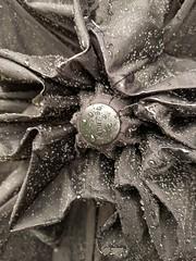 Regenblume (pizzocel) Tags: wasser regen tropfen schirm