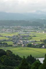 稲 (fumi*23) Tags: green field landscape nikon rice ricefield tamron 緑 風景 a09 d600 tamron2875 稲 2875mm ニコン タムロン tamronspaf2875mmf28xrdi