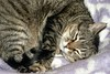 Pucca (vmribeiro.net) Tags: pucca cat gata gato sony a350 tamron tamronaf18200mmf3563xrdiiildasphericalif