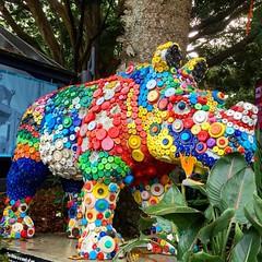 Colourful rhino! #michfrost #sydney