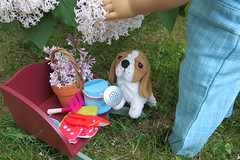 Grace is smelling the lilacs (Foxy Belle) Tags: kit american girl doll 18 inch ag historic outside garden plant flowers our generation og gardening tools