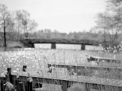 Bridge (tomkoivu) Tags: bridge n bro brygga mlnlycke 11028 m645