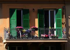 Windows (Mattia_EFA) Tags: windows roma verde casa nikon fiori finestre nikond7000 nikkor70300vred