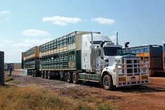 BUNTINE'S MAN WASHING OUT (Paulo660) Tags: kenworth road train cattle livestock truck australia bulls heifer bullock cow cows