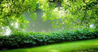 Silence... the most luxurious shade of green.