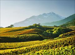 Alpine vineyards (Katarina 2353) Tags: mountain alps film landscape switzerland vineyard nikon europe swiss sion katarinastefanovic katarina2353