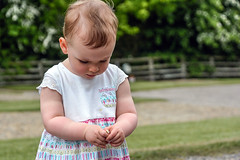 Inspecting a Daisy (Nikki & Tom) Tags: uk girl toddler child sophie tynewear
