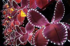 Chinese Lantern Festival (lucymagoo_images) Tags: philadelphia festival canon eos rebel lights bokeh chinese philly lantern sl1 phila lucymagoo lucymagooimages 2016night