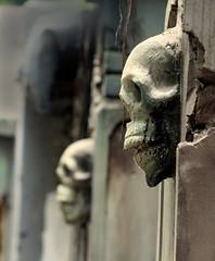Skull 02 (Ashraf Siddiqui 76) Tags: skull spooky
